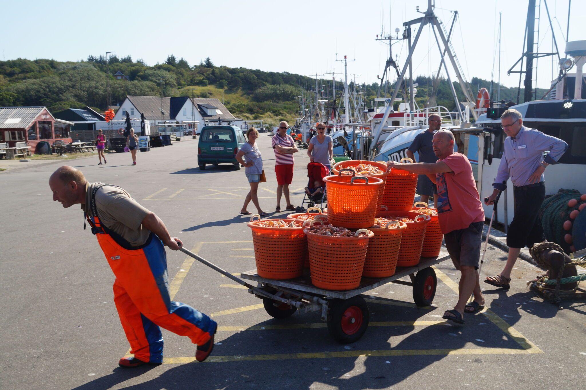 skaldyr transporteres fra Anholt havn