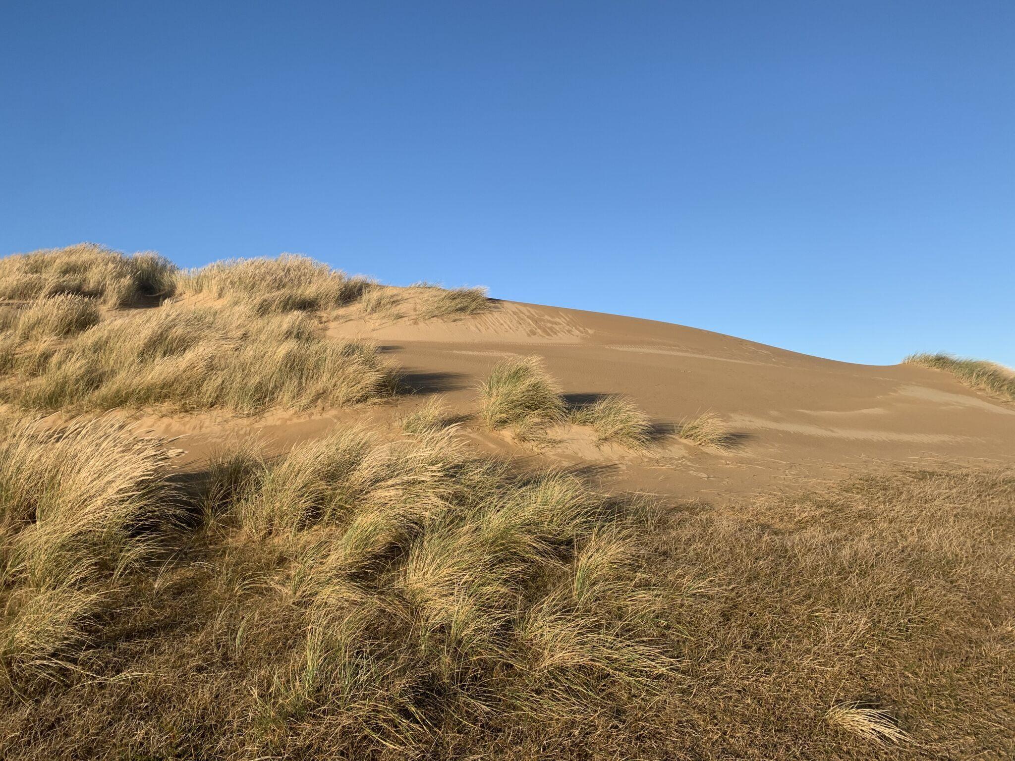 ørken med græs på anholt